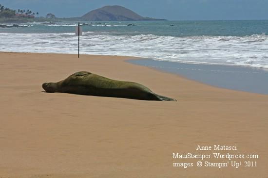 Keawakapu Monk Seal sunbathing