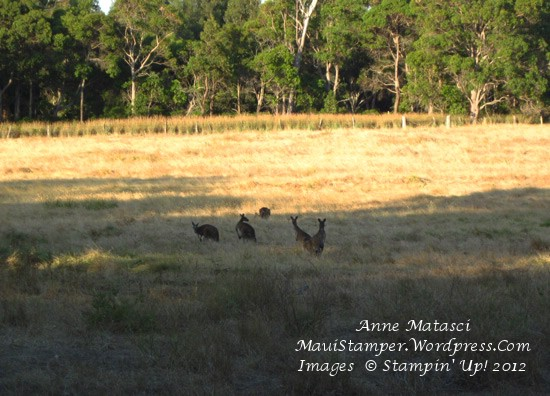 Roos in the field behind our cottage