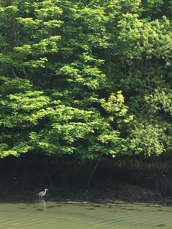 Maui Stamper Greens of Ireland