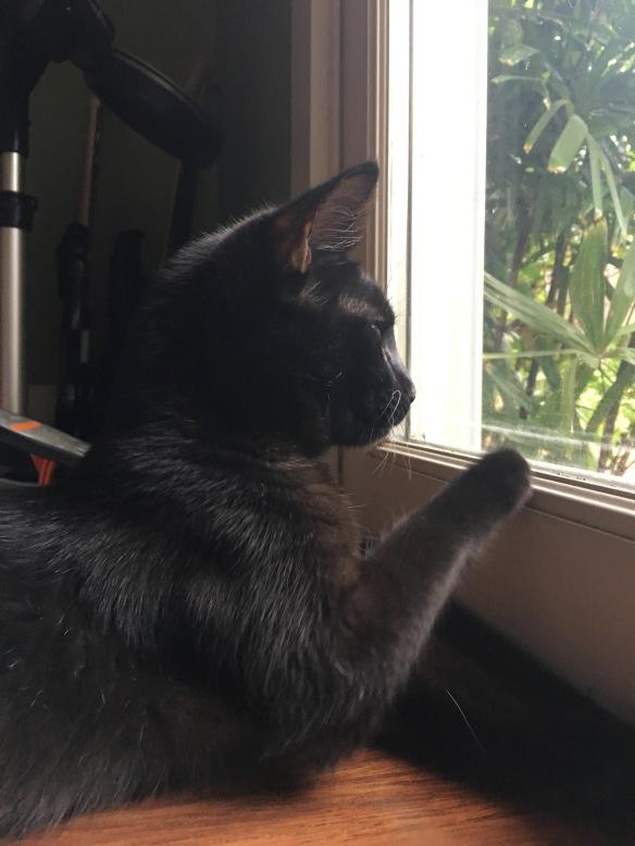 Maui Stamper Meet Bella